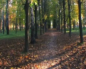 Walk in the golden autumn park glidecam