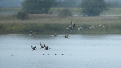 渡り鳥の朝_5