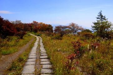 八ヶ岳 美し森