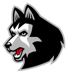 siberian husky dog mascot