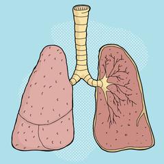 Lungs Cartoon