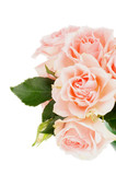 Cream Pink Roses