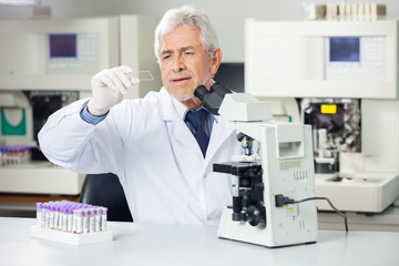Scientist Analyzing Microscope Slide In Lab