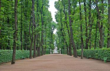 Big alley in the Summer Gardens park in Saint-Petersburg, Russia