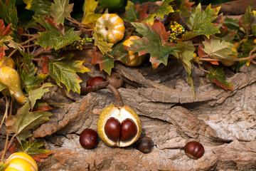 Doppelte Kastanie vor Baumrinde im Herbst