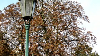 street lamp (light) - tree (branch) - fallen leaves - autumn
