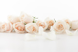 White roses and petals - 70980634