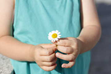 Small girl holds beautiful daisy in her hand