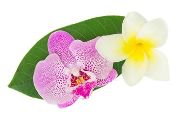 pink  orchid and frangipani