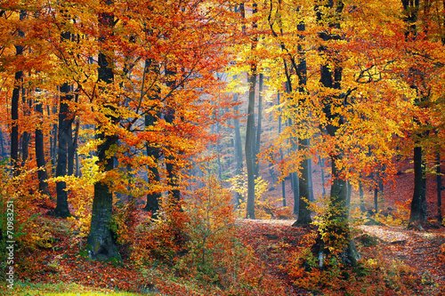 Light in autumn forest