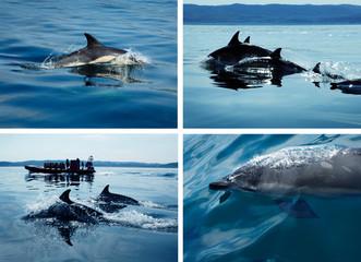 Delfintour