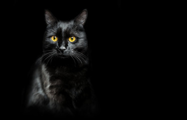 black cat on black