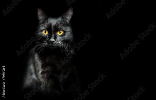 black cat on black - 70984264