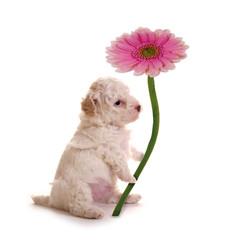 Kleiner Hund mit Blume