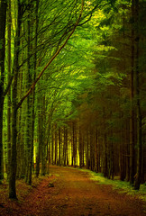 trees with green leaves and lighted