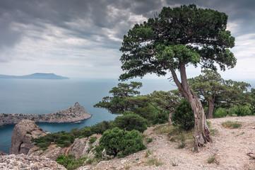 дерево на фоне моря