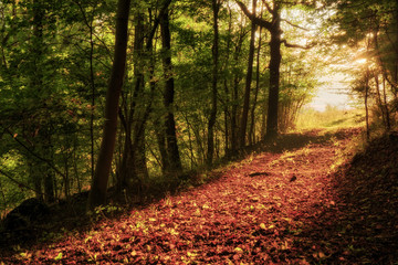 Enchanted Autumn Forrest