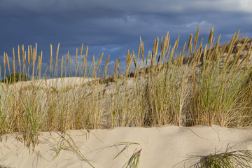 Sand dunes on the Baltic coast in the morning
