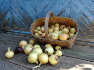 basket of onion on wooden background