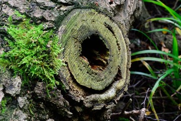 tree trunk and hole