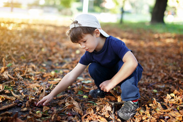 Little boy in cap searching for chestnuts