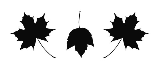 Detailed maple leaves illustration isolated on white background