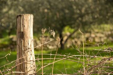 legno, recinto, toscana