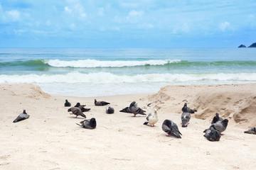 Tauben am Strand