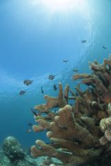 青い海とサンゴと小魚