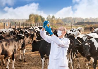 veterinarian at  farm cattle