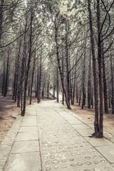 Sidewalk in the park.