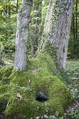 double tronc