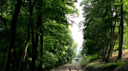 the track for the train in the forest - tree