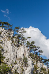 Mountain scenery with black pine trees Pinus nigra