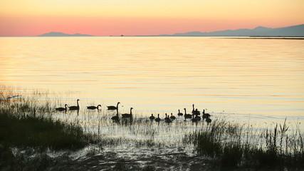 Fraser River Geese Sunset