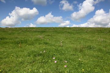 Prairie en fleurs à Dompierre.
