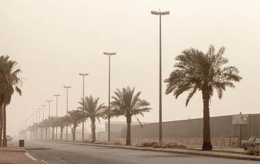 Dust storm on the street view palms, Saudi Arabia