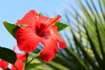 red flower on a background of palm leaf