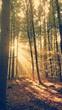 canvas print picture - Waldlichtung Sonnenstrahlen