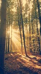Waldlichtung Sonnenstrahlen