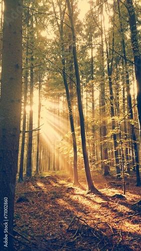 canvas print picture Waldlichtung Sonnenstrahlen