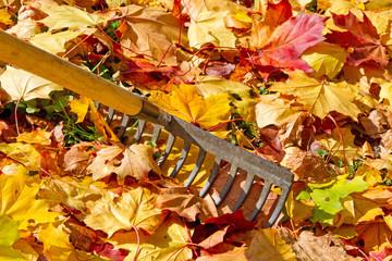 Gartenarbeit mit dem Rechen
