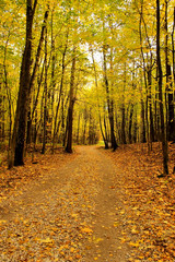 Autumn landscape. Park in the fall. Golden autumn.
