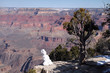 Grand Canyon Snowman and Winter