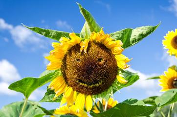 Sonnenblume Gesicht Lachen