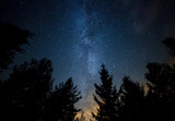 Fototapety Milky Way over the Forest