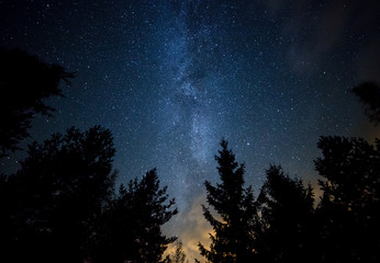 Milky Way over the Forest