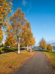 Autumn landscape with bridge