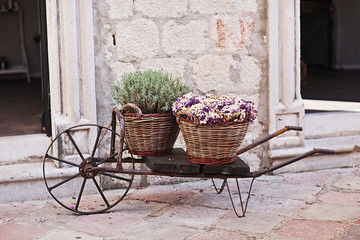 Vintage wagon with basket with lavender flowers near the old wal