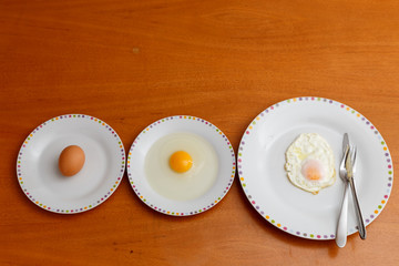 egg stages